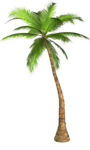 palm-tree-transparent-background